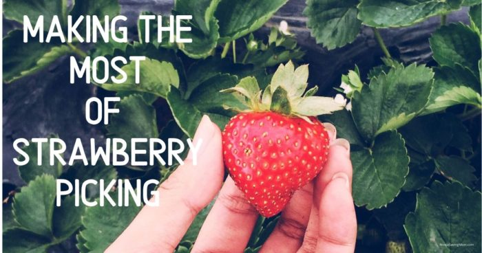 Making the Most of Your Strawberry Picking